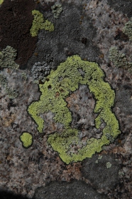 paintig_abstract_lichen