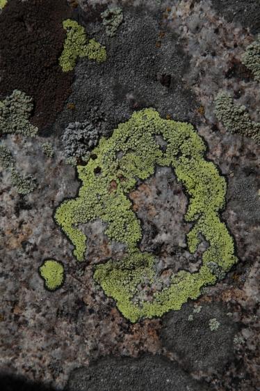 paintig_abstract_lichen