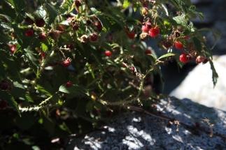 textures_raspberries