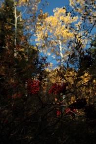 textures_fall