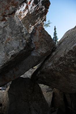 textures_treeandrock