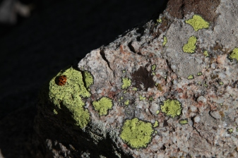 textures_ladybug