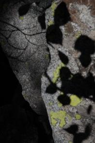 textures_shadow_lichen