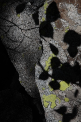 textures_shadow_lichen