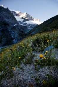 glacial_meadow