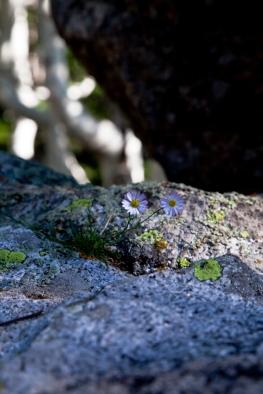 granite_flora