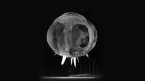 atomic_rapatronic_skull
