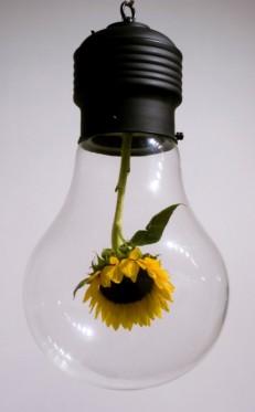 myeongbeom_kim_sunflower_bulb