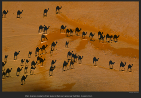 nyt_camel_shadows