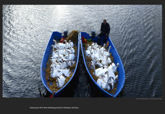 nyt_germnay_geese_boat