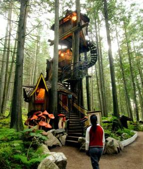 stellar_tree_house