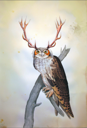 gibben_horned_owl