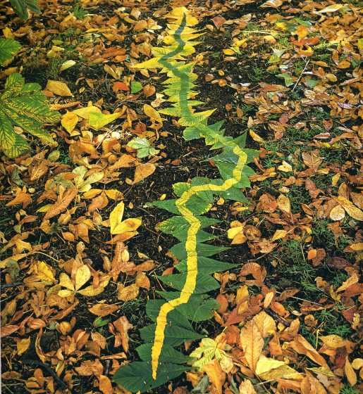 andy_goldsworthy_leaves_flip
