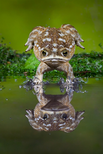 frog_emersion