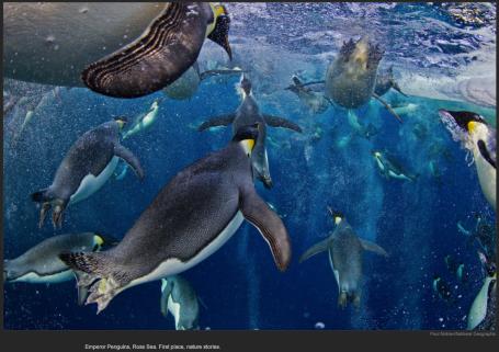 nytl_awards_penguins