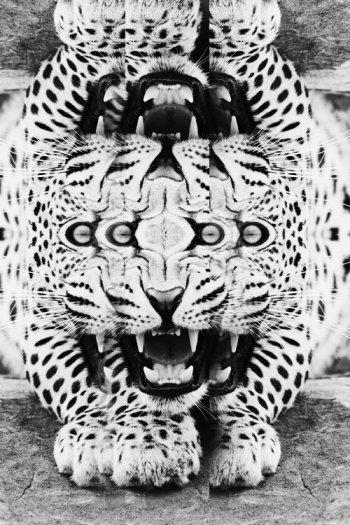 leopard_keilidoscope