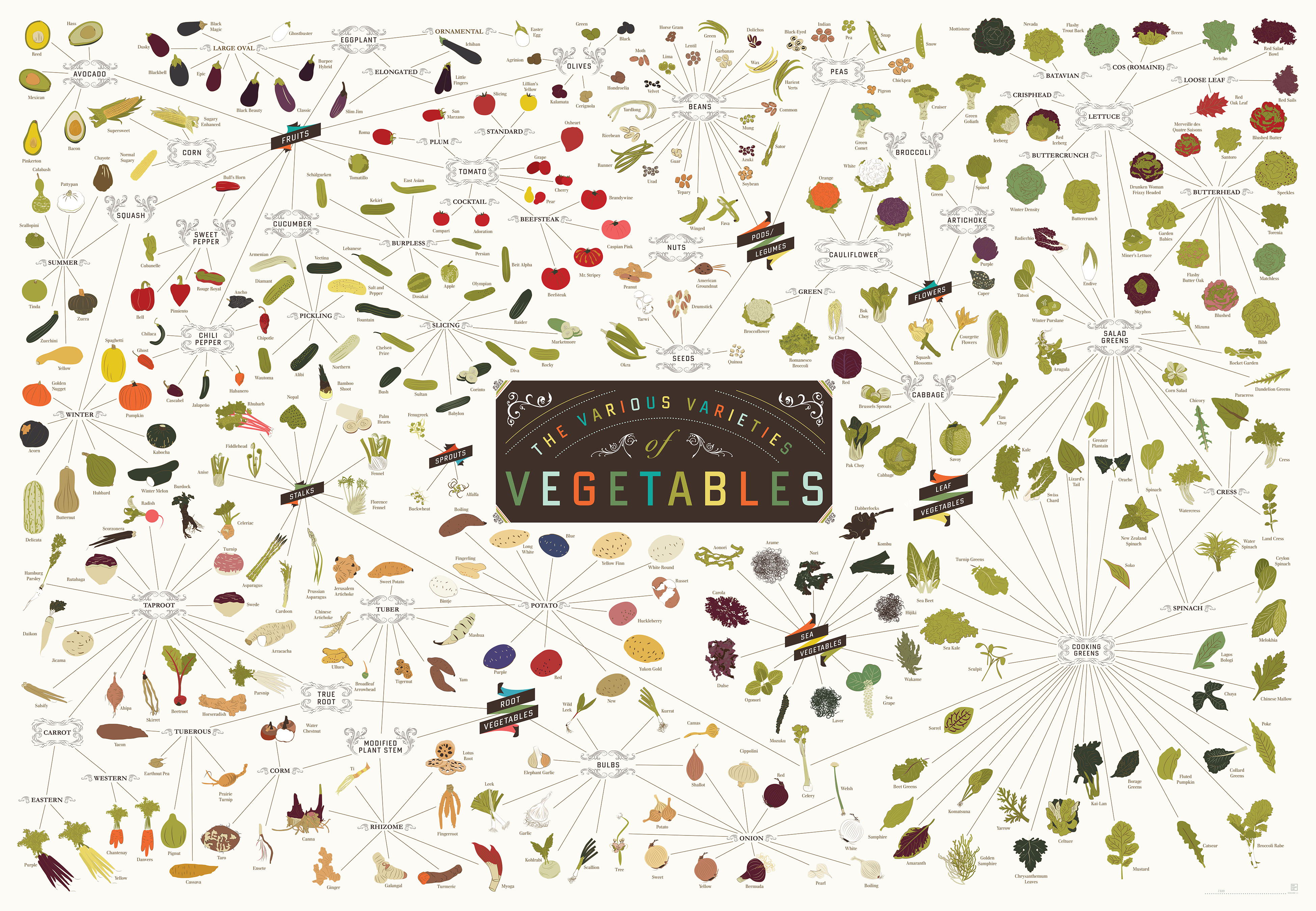 massive veggies and fruits family tree chart capturing