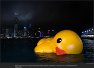 next_nytl_rubber_duckie