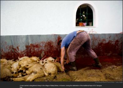 nytl_sheepslaughter