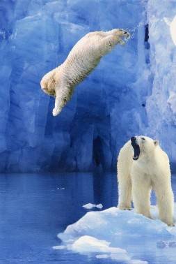 polar__bear_dive