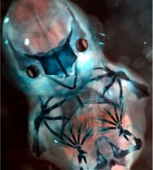 bat_embryo
