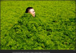 nytl_algae_man