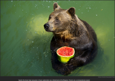 nytl_bear_watermelon_treat
