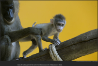 nytl_munich_monkey