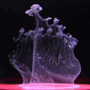 mark_mawson_jellyfish