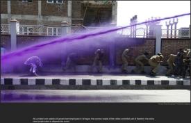 nytl_purple_protestors