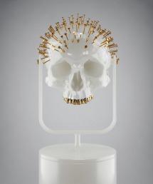 hedi_xandt_specimen_skull
