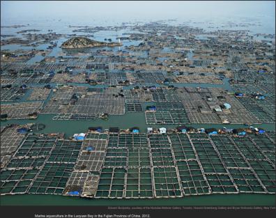 burtynsky_water_aquaculture