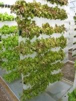 vert_garden_efficiency