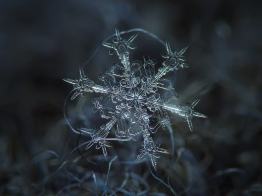 alexey_kljatov_snowflake9