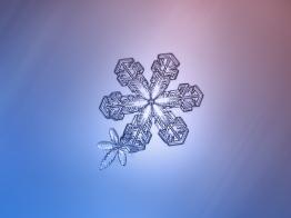 alexey_kljatov_snowflake_flower_bee