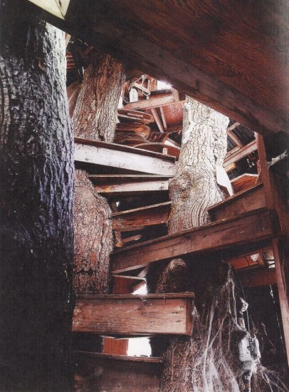 stairs_in_tree