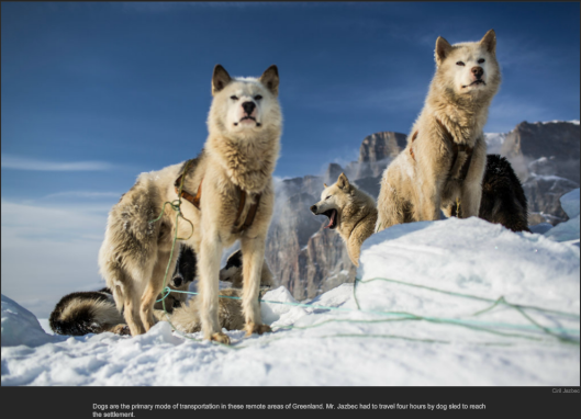nytl_sled_dogs