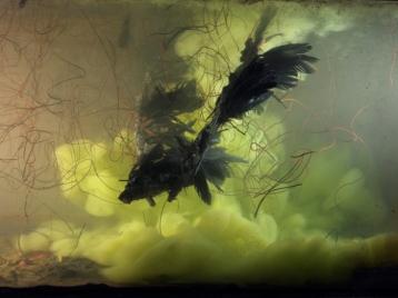 kim_keever_black_bird