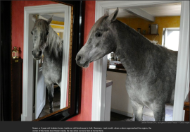 nytl_house_horse