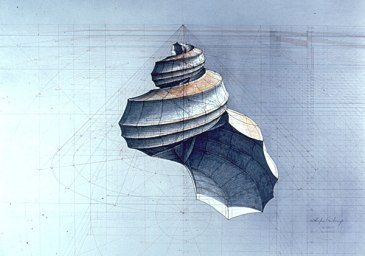 rafael_araujo_calculo_shell