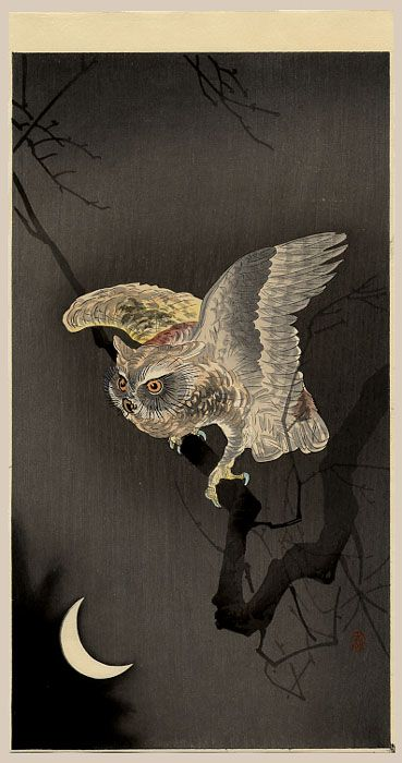 koson_night_owl