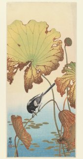 ohara_koson_wetland_bird