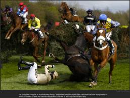 nytl_horse_tumble