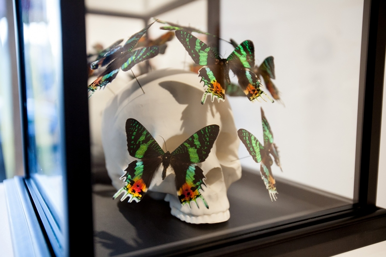 peter_gronquist_skull_with_butterflies