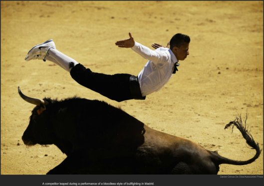 nytl_bull_diving