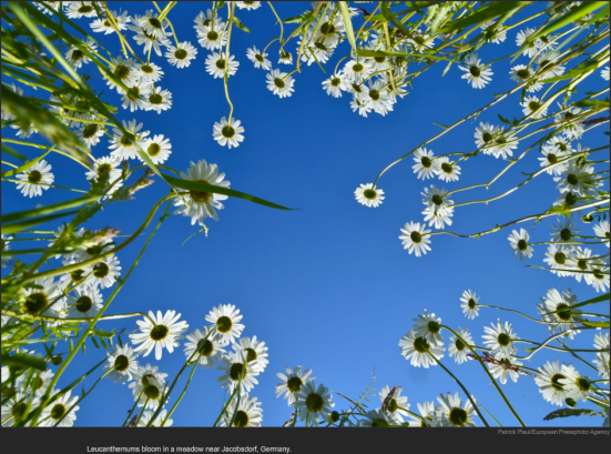 nytl_germany_flowers