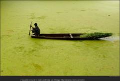 nytl_kashmir_algae_lake