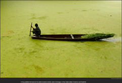 nytl_kashmir_algae_lake