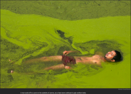 nytl_algae_swimming