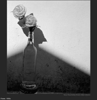 nytl_flower_still_life